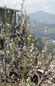thanedar-shimla-9